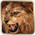 3D Lion live wallpaper icon