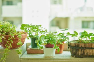 Photo: 観葉植物など のお世話もおまかせください。