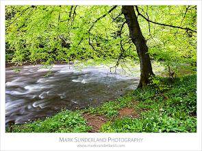 Photo: The Nidd Gorge in Spring, near Knaresborough, Yorkshire, England
