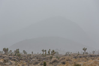 Photo: Snow storm in the Joshua trees