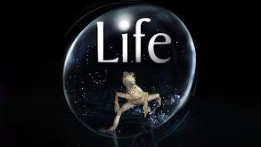 Life thumbnail
