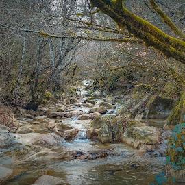 Rio en calma by Angel Sevilla - Nature Up Close Water ( calma, arboles, naturaleza, bosque, frondoso, corriente, rio, agua, tranquilidad )