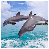 Lovely Dolphin Wallpapers