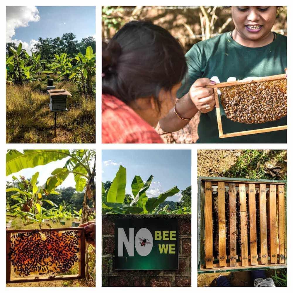 honey bee farm dandeli forest reserve karnataka