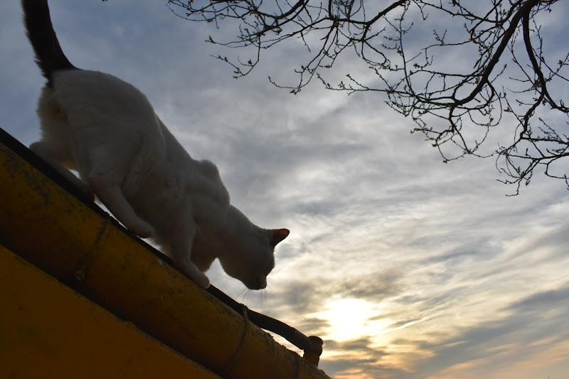 Il sole e il gatto  di francesca_rossi
