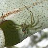 Magnolia Green Jumper ♂