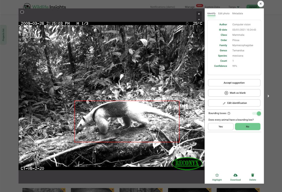 Wildlife Insights predicts a northern tamandua.