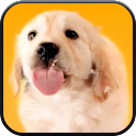 Puppy Licks Screen Video LWP icon