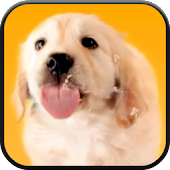 Puppy Licks Screen Video LWP