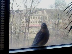 Photo: Office Hawk