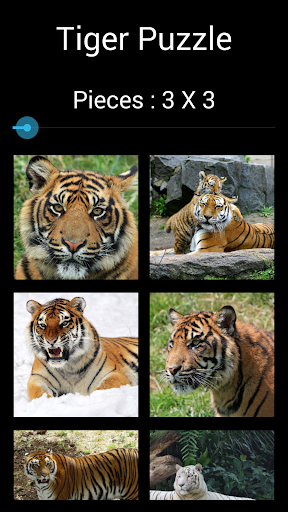 Tiger Puzzle: Jigsaw Puzzle
