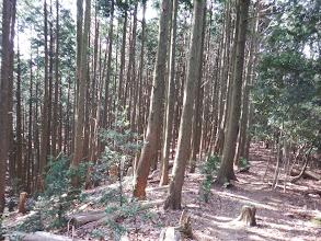 南へ向かう(左が植林帯に)