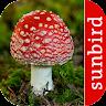 com.sunbird.mushroomid