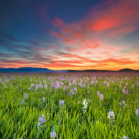 Sunrise at Camas Prairie Centennial Park and Red Sky by Charles Knowles - Landscapes Prairies, Meadows & Fields ( idaho, sunrise, camas, flowers, prairie )