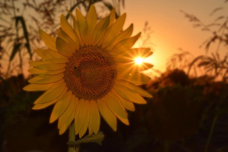 Doppio sole di AlfredoNegroni