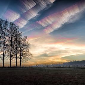 Rainbow Dawn by Jim Salvas - Landscapes Sunsets & Sunrises ( clouds, field, dawn, trees, jet trails, sunrise )