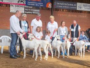 Photo: Rubriek 1: Witte lammeren geboren tussen 8 januari en 5 februari 2015.  1a. Liesje 67; 1b. Liesje 75; 1c. Grietje 5; 1d. Grietje 4; 1e. Liesje 69;  2a. Liesje 70.