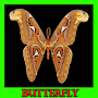 Beautiful Butterfly Gallery APK icon