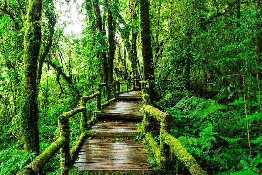 Ang Ka Nature Trail, Doi Inthanon