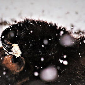 I gotta a Cold by Linda Douglass - Animals Other