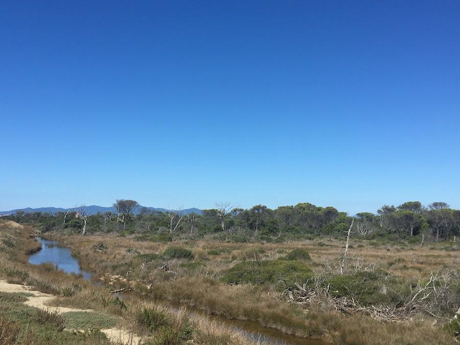 Padule del Saline, Parco naturale della Maremma