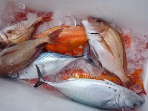 Photo: これは戸田さんのクーラーBOX。先にシメた魚ですな。