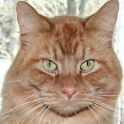 Pet the Kitty icon