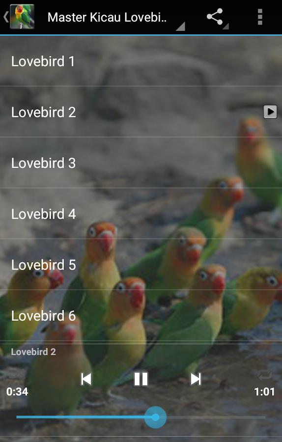 master kicau lovebird   android apps on google play