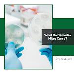 What Do Demodex Mites Carrry?