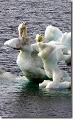 الدب القطبي و الجليد الذائب !