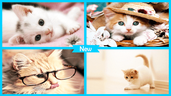 Cutest Cat Wallpapers - náhled