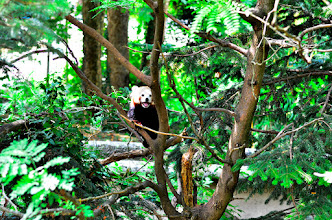 Photo: ...pa splezala na drevo...