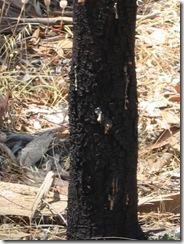 Amber tree 2