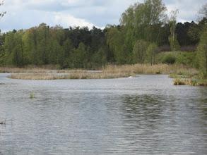 Photo: Po nich pływają łabędzie. Z daleka było też słychać krzyk żurawi.