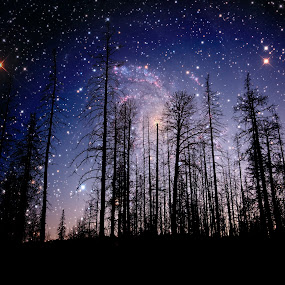 The heavens declare the glory of God by Alan Crosthwaite - Landscapes Starscapes ( god, beliefs, heaven, glory, forest, space, believe, silhouetted, sky, outer space, silhouettes, trees, heavens )