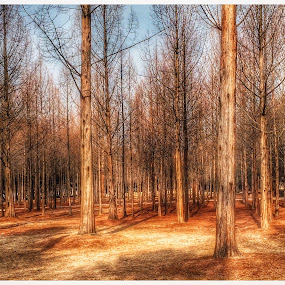 Nami Island, Korea by HP Tang - Landscapes Travel ( hdr, seoul, korea, nami island )