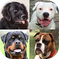 Dogs Quiz - Guess Popular Dog Breeds on the Photos download