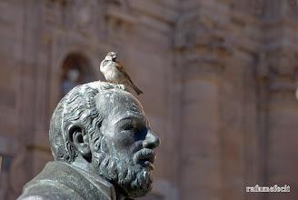 Photo: Pájaros en la cabeza - Salamanca [2011]