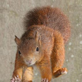 Touchdown. by Roy Rimmer - Animals Other Mammals