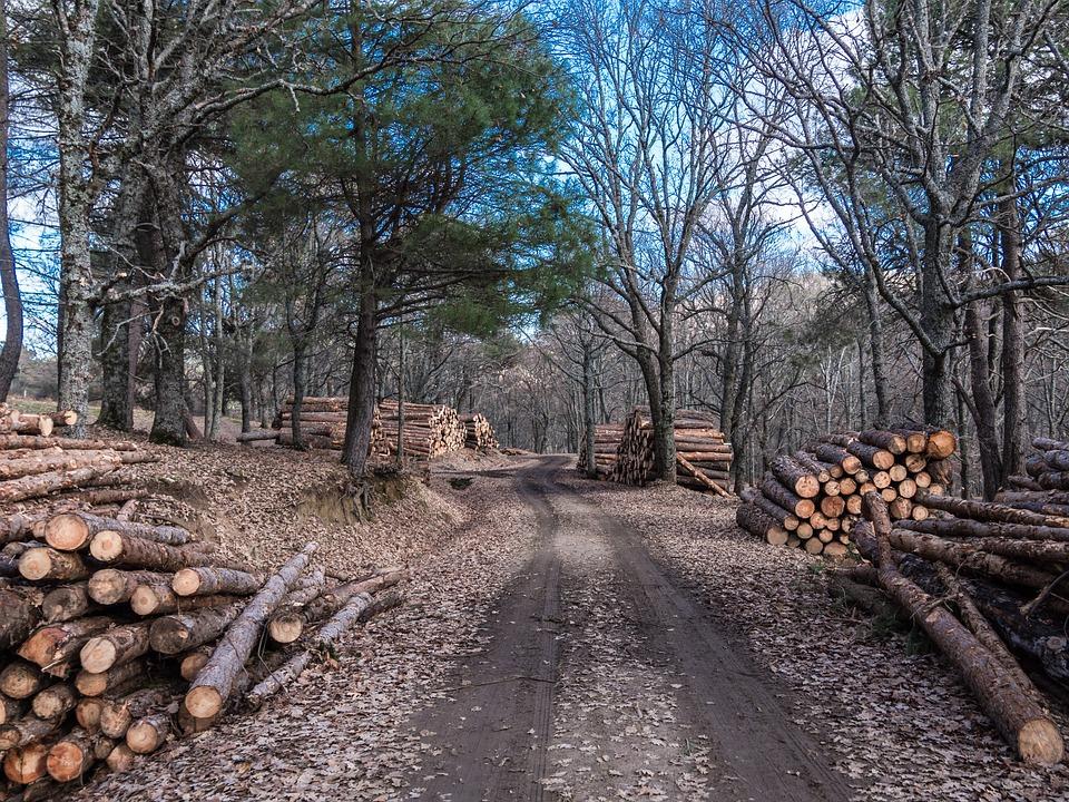 Wieso werden Holzstämme bewässert?