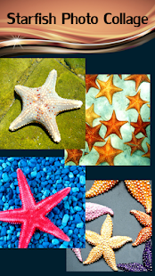 Starfish Photo Collage - náhled