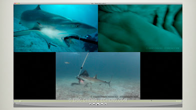 Photo: Used GoPros to get footage inside shark mouths: http://echeng.com/journal/2010/10/02/shark-bite-gopro-divefilm-hd-podcast/