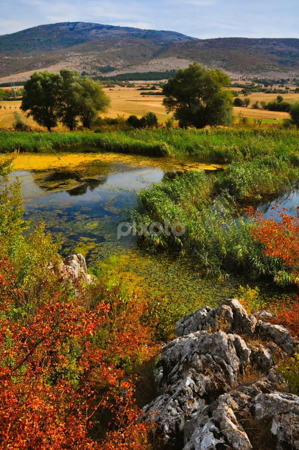 autumn by Игор Ђорђевић - Nature Up Close Trees & Bushes ( autumn, wetlands, colors, lake, forest )