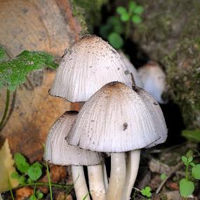 by David Branson - Nature Up Close Mushrooms & Fungi