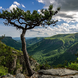 Lonely Tree by Jay Michaud - Landscapes Mountains & Hills ( mountains, valley, clouds )