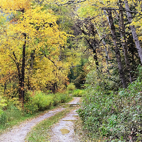 The Road Less Traveled by Angelica Less - Landscapes Forests ( black hills, autumn leaves, fall colors, autumn, fall, south dakota, autumn colors,  )