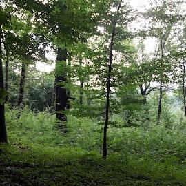 Гора by Georgi Kolev - Nature Up Close Trees & Bushes ( гора., тъмно., ден., зелен., светлина. )