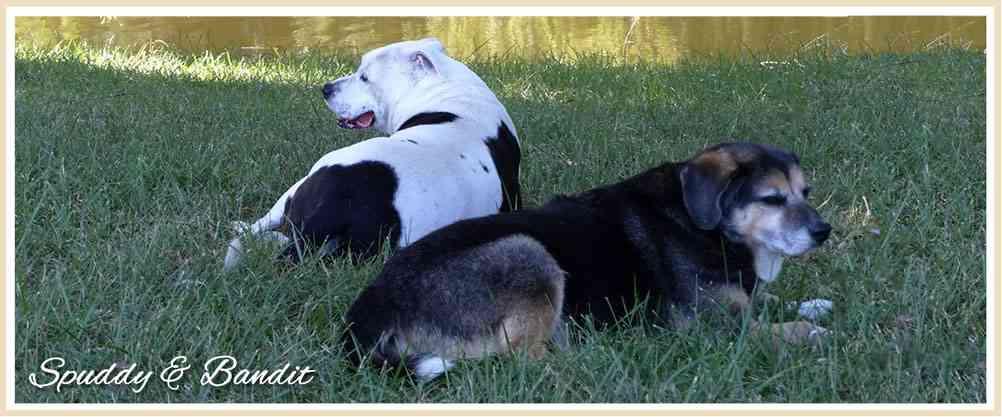 pet loss, remembering our treasured pets