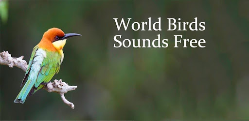 World Birds Sounds Free - Apps on Google Play