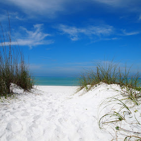 A Closer Look  At Nature by Jackie Sleter - Landscapes Beaches ( sand, florida, gulf, coquina, bradenton, fun, beach, relaxing, sun, relax, tranquil, tranquility )